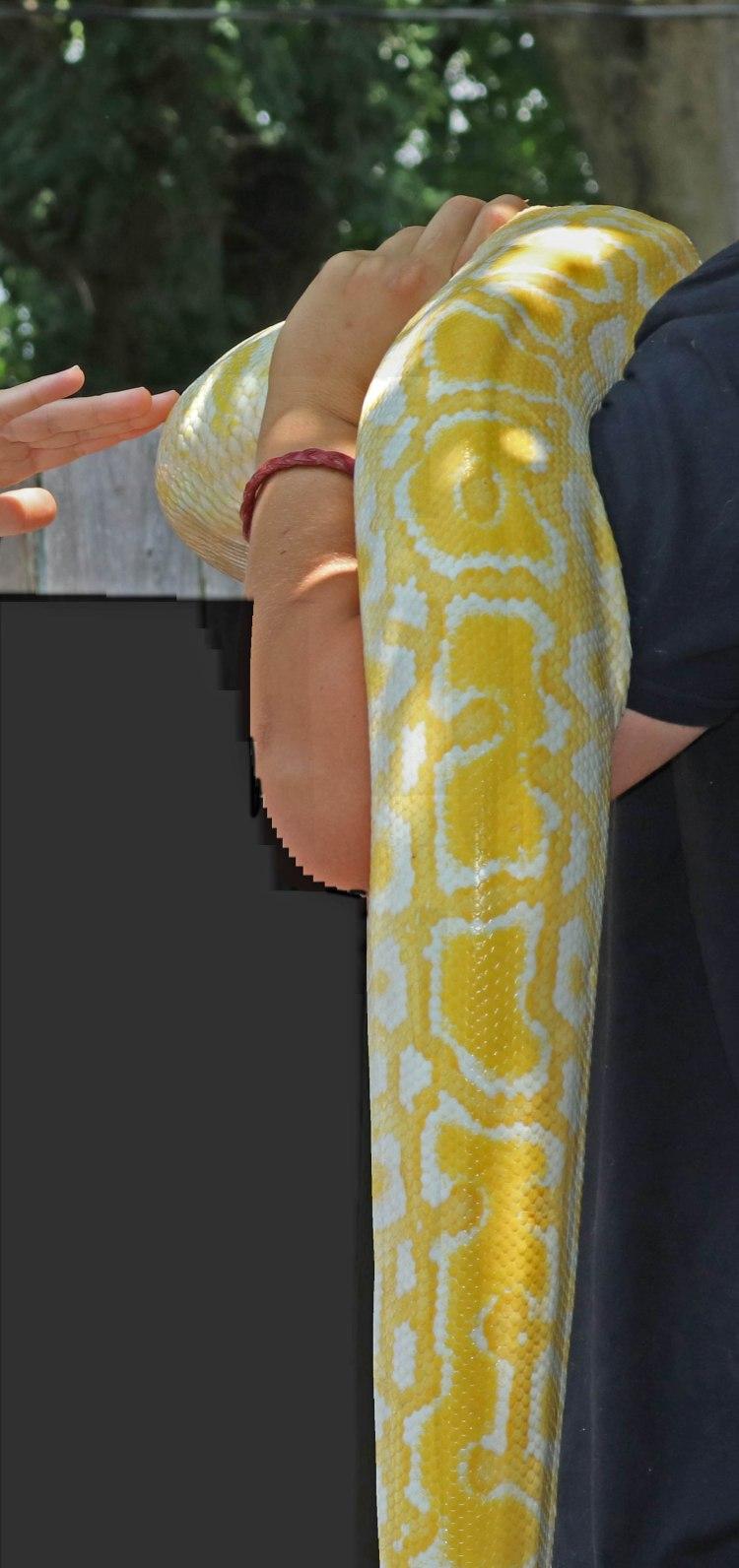 5783 Snake