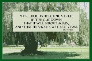 Job 14 7 tree_WP