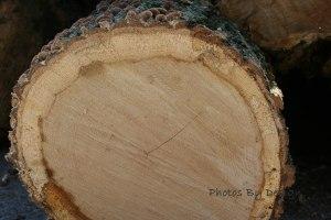 8910 tree trunk