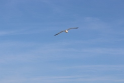 Soar above the crowd in order to achieve all that is for you to accomplish.