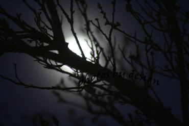tree in front of the moon at night